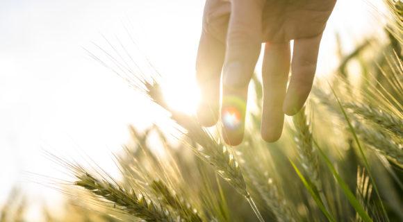 Agriculture 4.0 – bringing AgTech ecosystem together