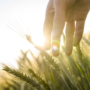 Agriculture 4.0 – bringing AgTech ecosystem together