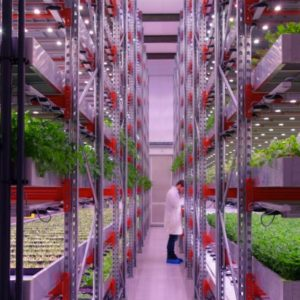 Impact of Ag Tech in startups ecosystem and people's lives by João Igor, Agriculture 4.0