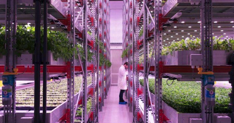 The urban farmer: interview with João Igor of CoolFarm